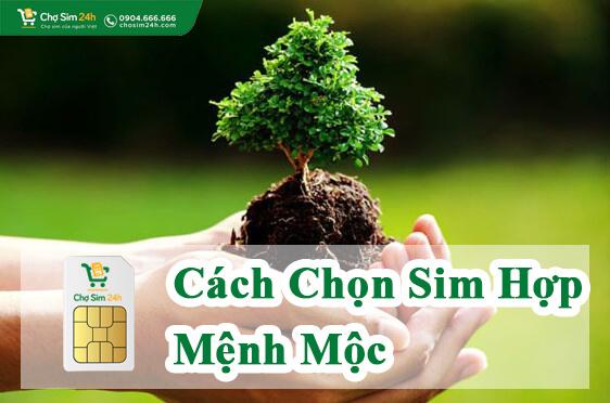 sim-hop-menh-moc_1